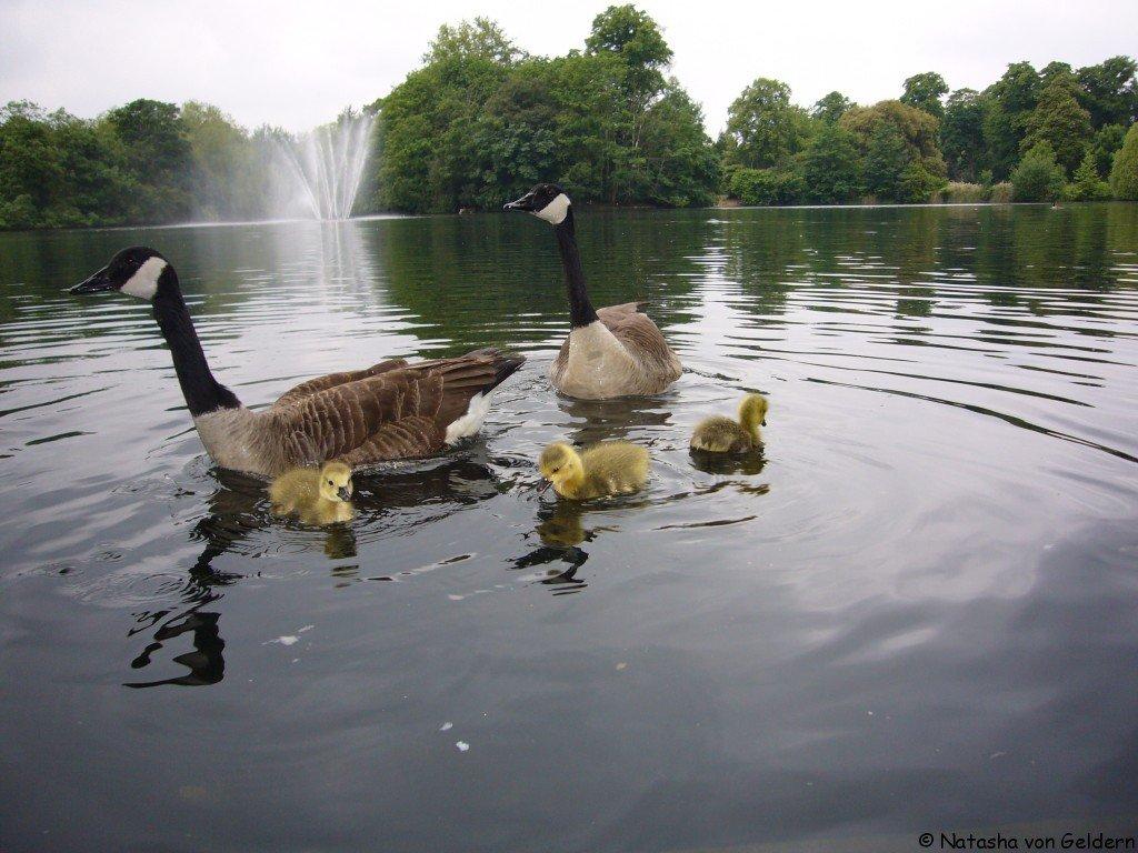 Victoria Park, east London