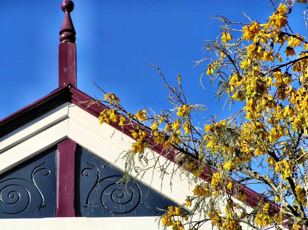 New Zealand meeting house and kowhai