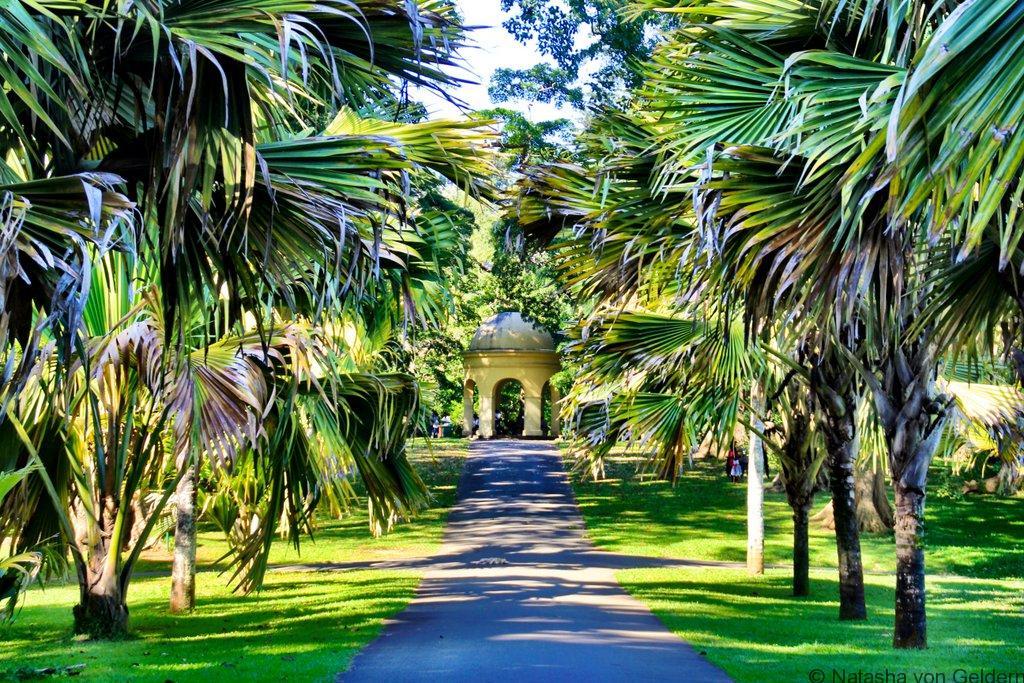 Kandy Royal Botanical Garden Sri Lanka