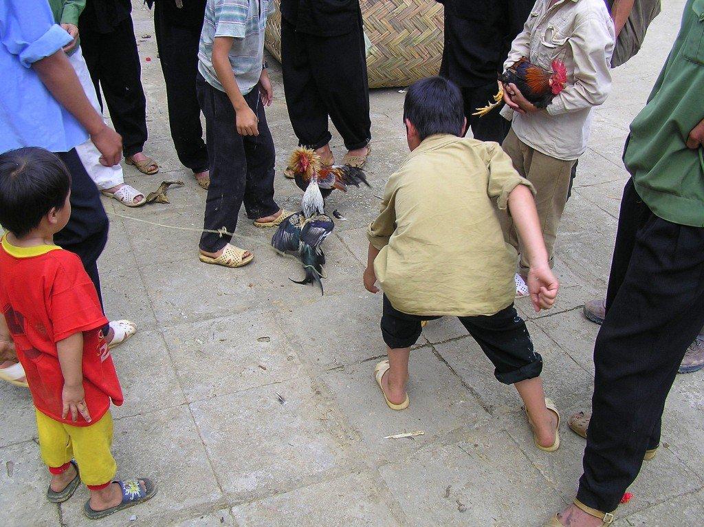 Cock-fighting-Bac-Ha-market-Vietnam