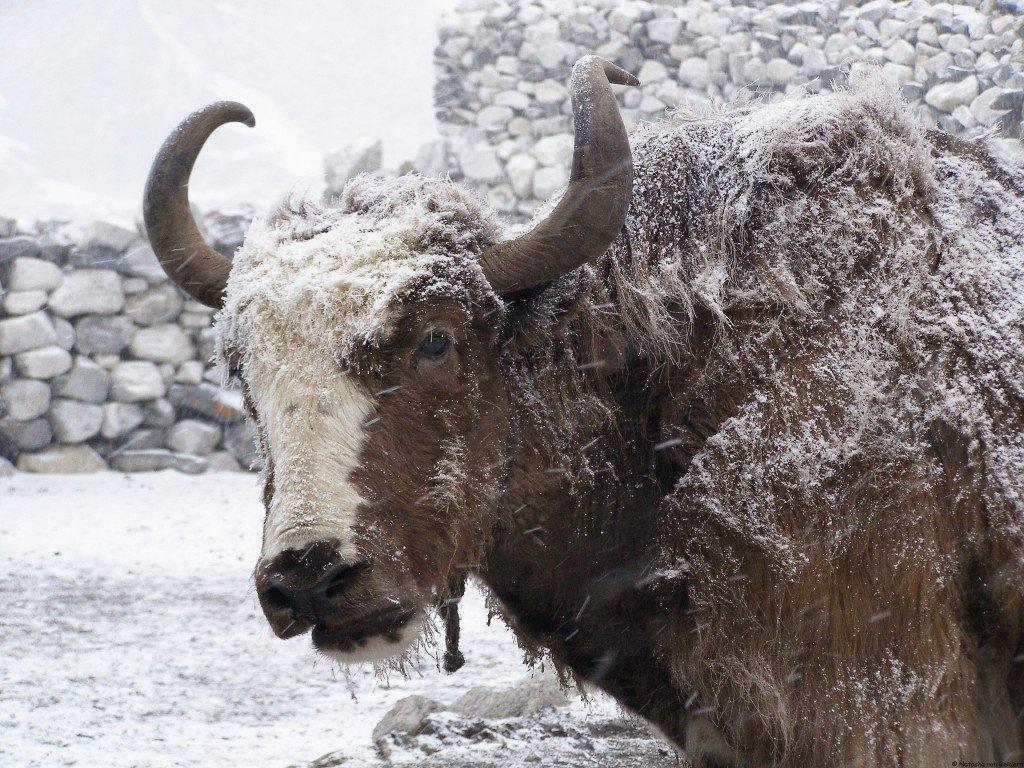 Nepal: Everest region trek