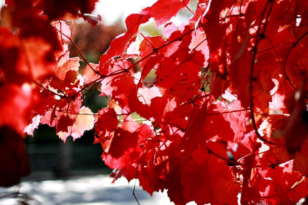 Autumn in Daylesford Victoria Australia