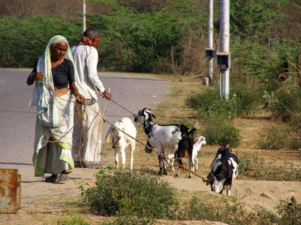 Goatherds-near-the-Taj-Mahal-Agra-India