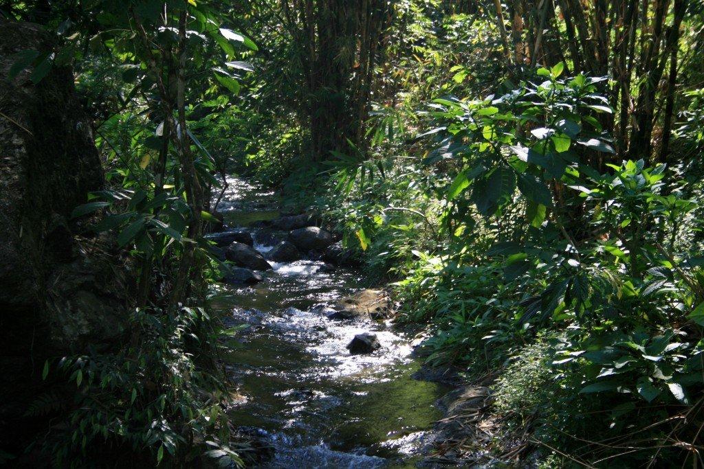 Waterfall trek, Munduk, Bali