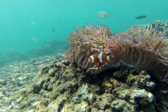 Snorkelling-Manukan-Sapi-Islands-Tunku-Abdul-Rahman-Park-Malaysia