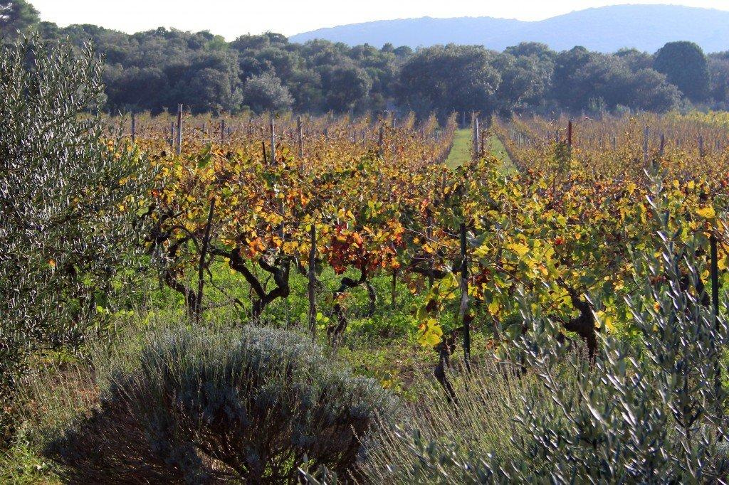 Pakleni Islands vineyards and orchards, Croatia