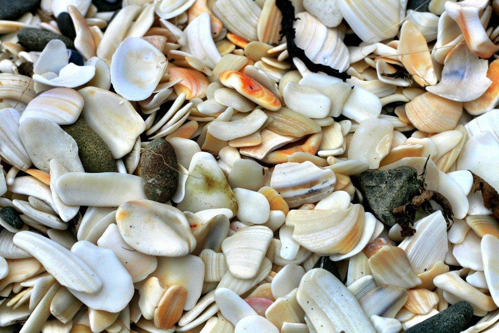 Nga-Tapuwai-o-Toi hike Whakatane New Zealand shells