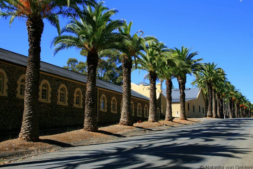 Seppelt vineyard, Barossa Valley, South Australia