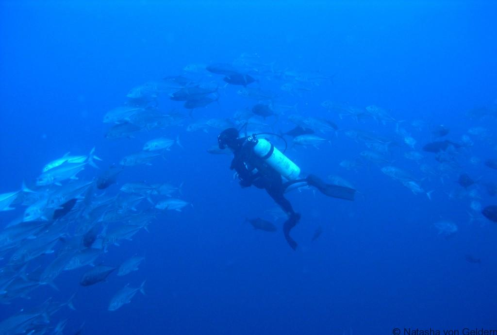 Diving holidays Seychelles