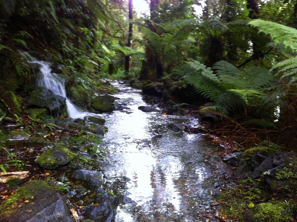 Flooding Milford Track New Zealand Photo by Natasha von Geldern