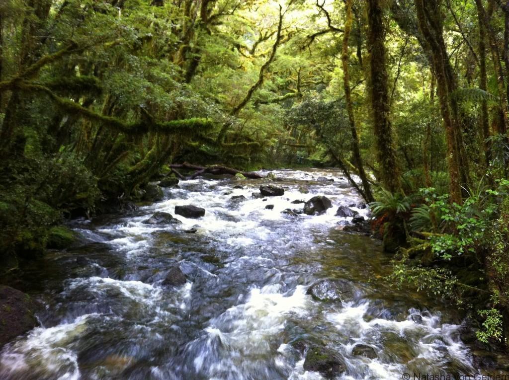 Floodwaters Milford Track New Zealand Photo by Natasha von Geldern