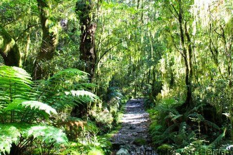 Forest Milford Track New Zealand Photo by Natasha von Geldern