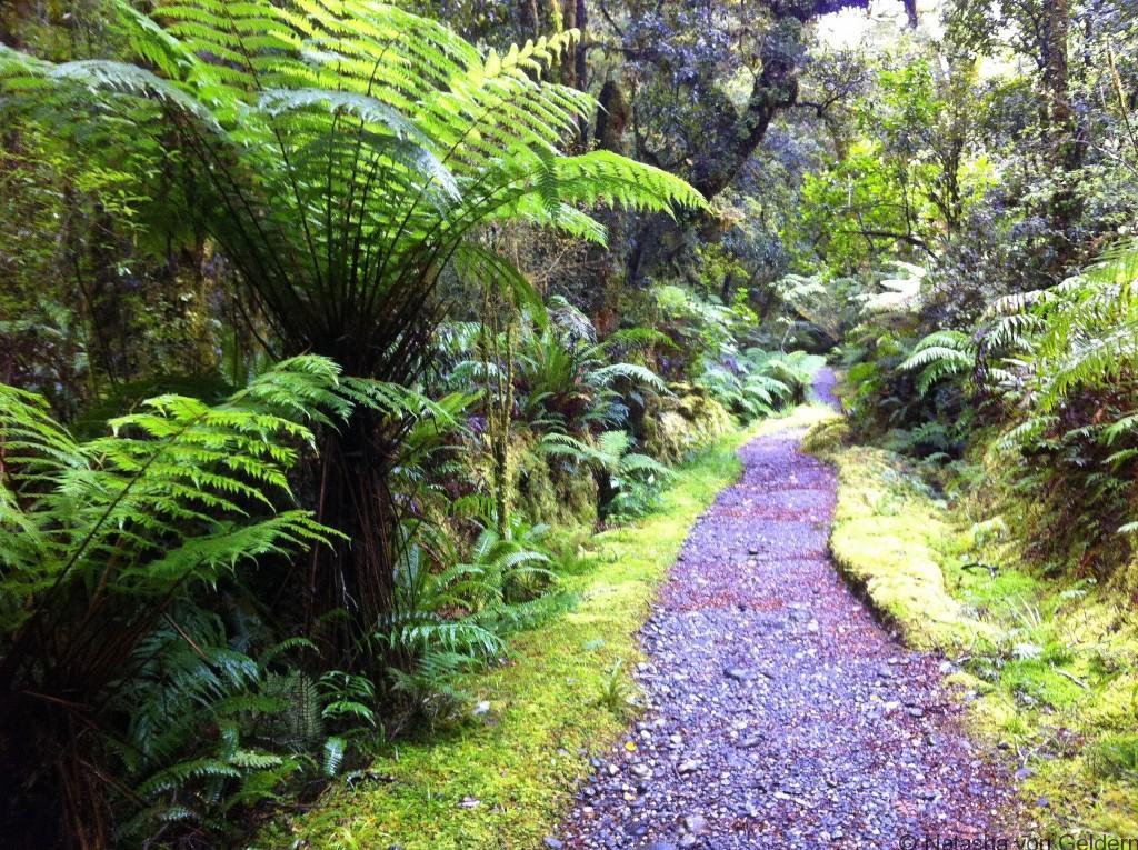 Milford Track day 4 New Zealand photo by Natasha von Geldern