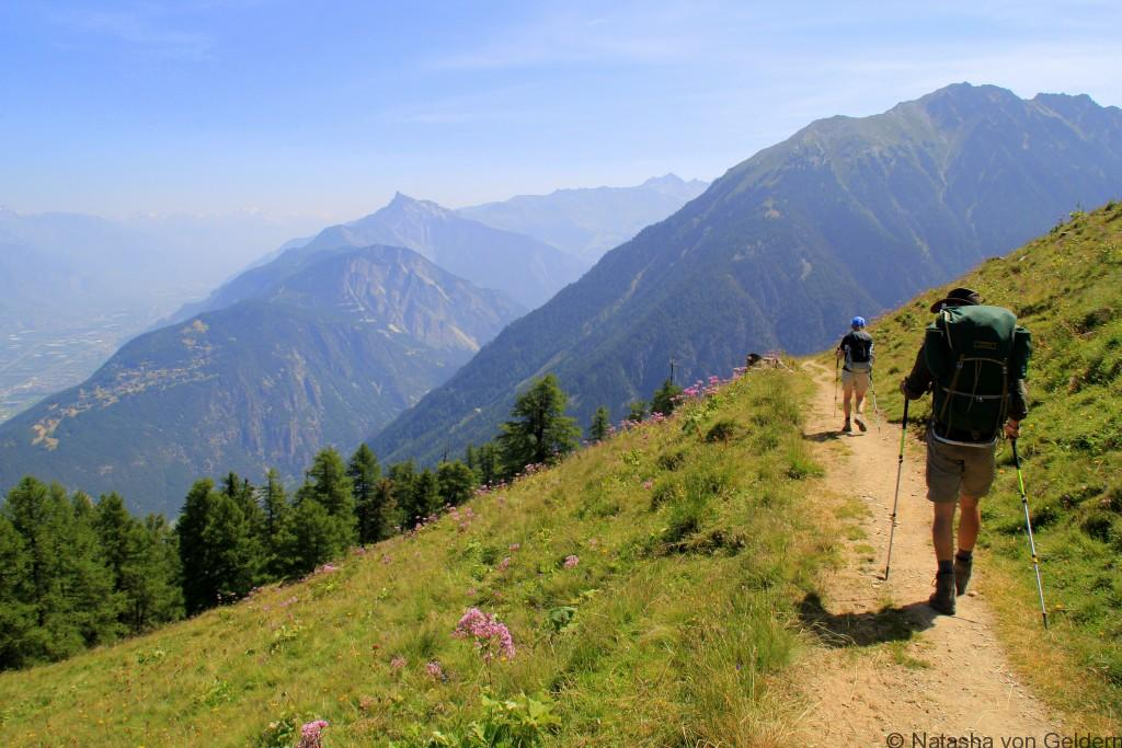 Alp Bovine hiking the Tour du Mt Blanc, Switzerland