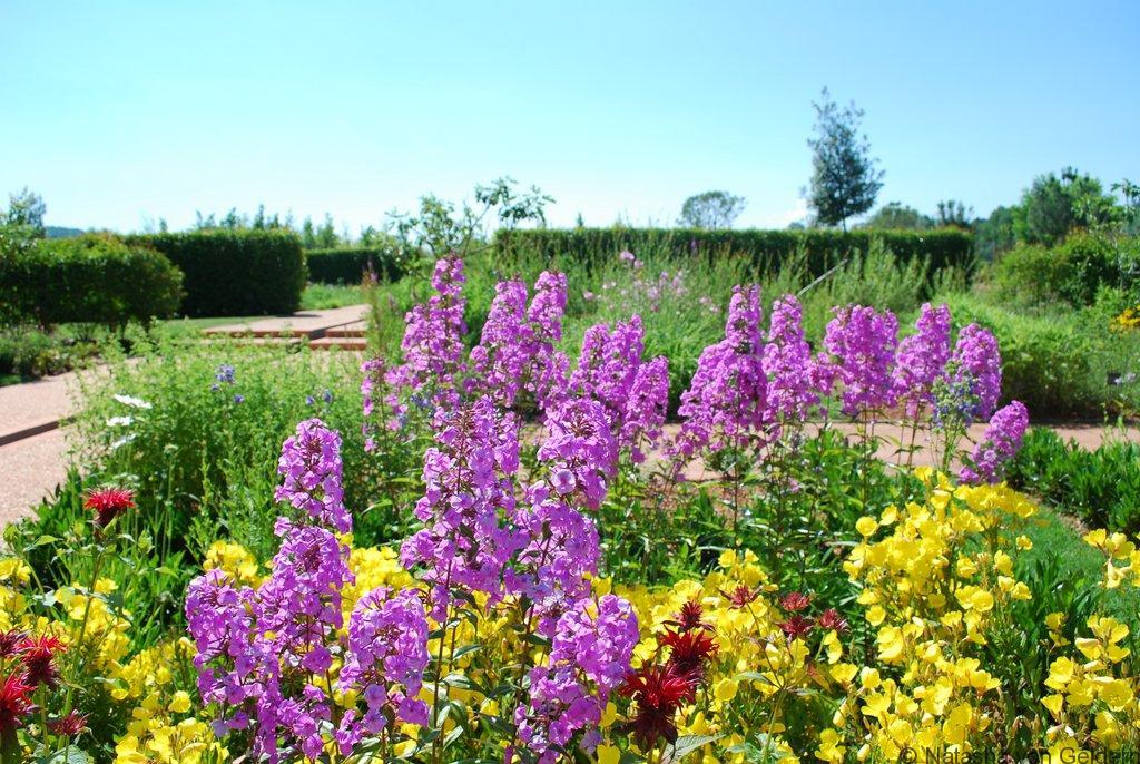 Jardin-provençal-en-juin