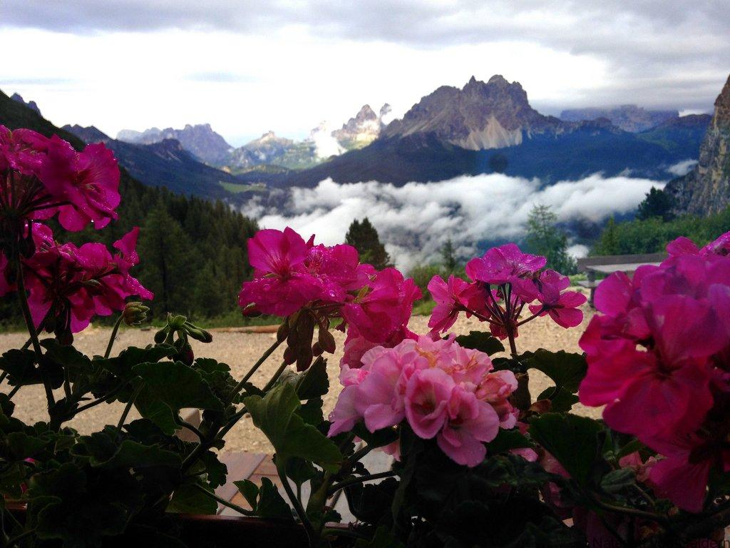 Rifugio Vandelli and Cristallo Dolomite Mountains Italy