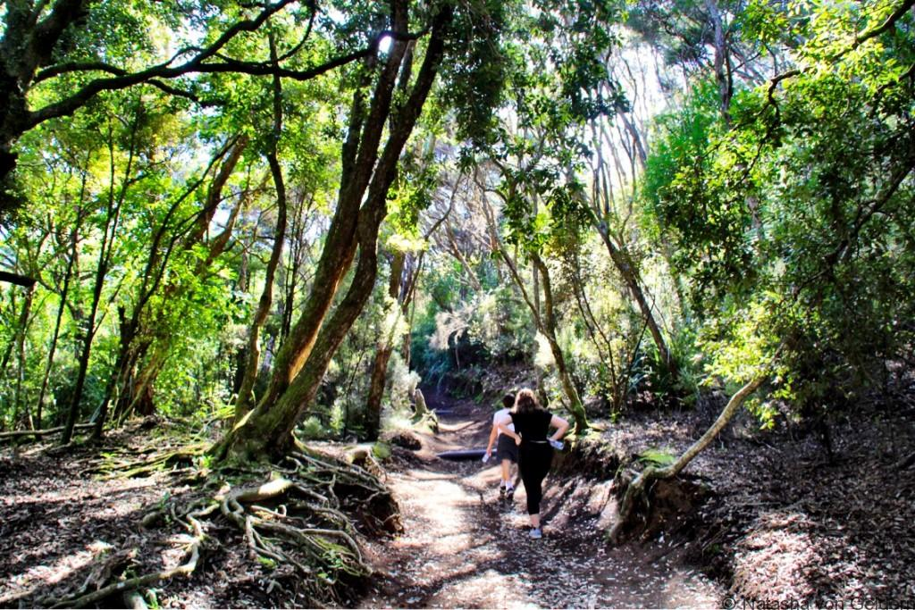 Rangitoto Island summit hike forest New Zealand