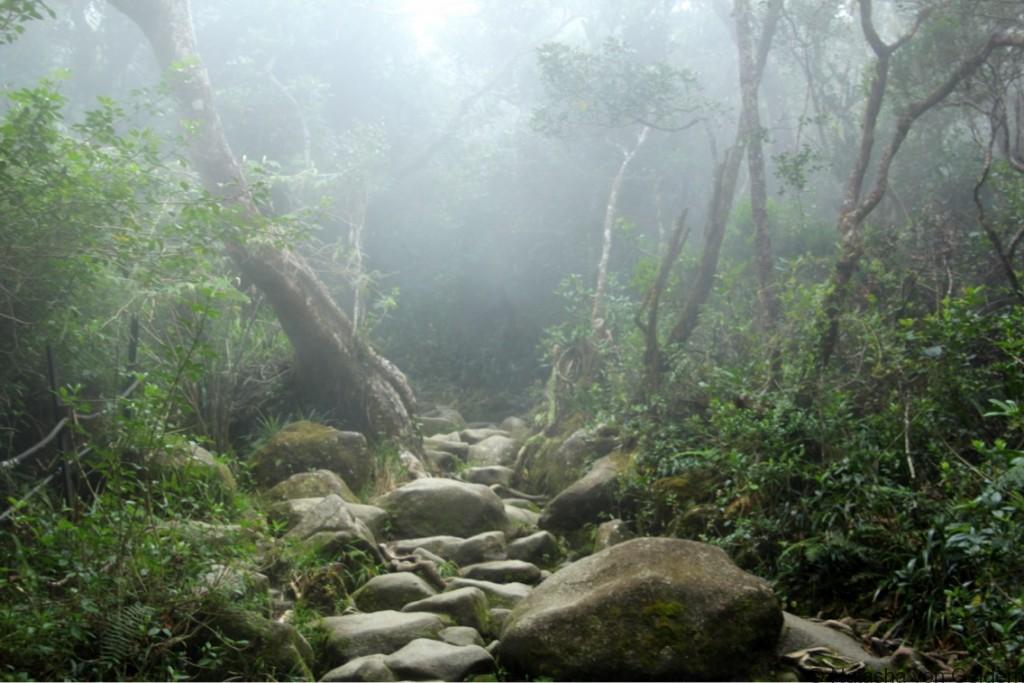 Misty jungle Mt Kinabalu hike Malaysia